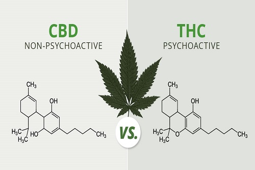 The Entourage Effect: How CBD & THC work together?