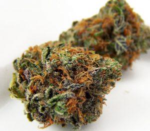 DUrban-Poison-strain
