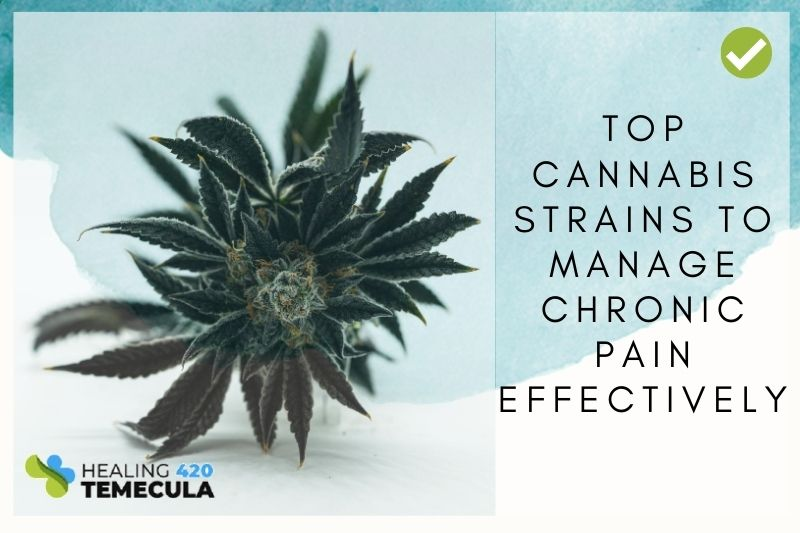 Top cannabis strains to manage chronic pain effectively