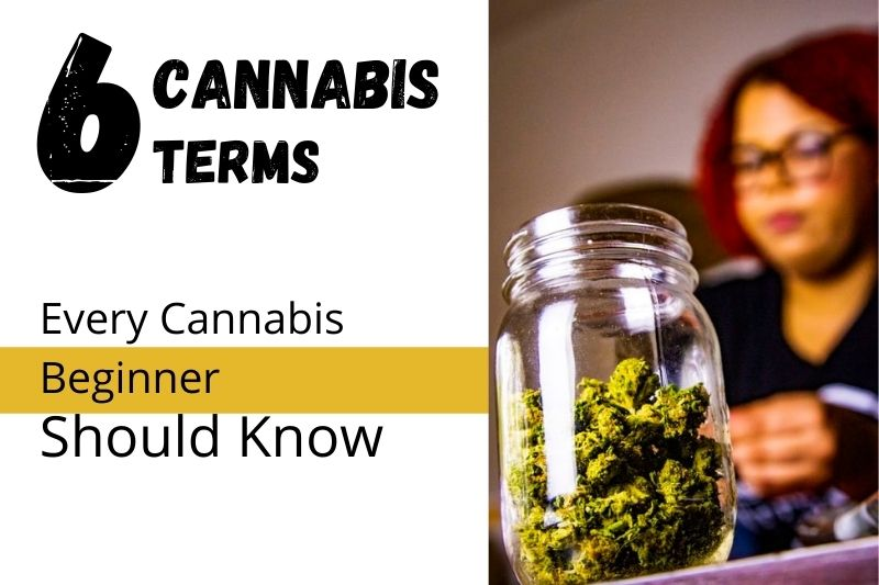 A Beginners Introduction to Basic Cannabis Terms